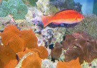coral reef aquarium