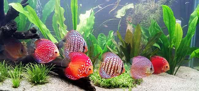 freshwater aquarium tank setup tip