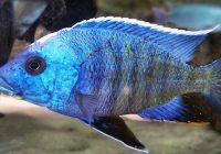 right aquarium fish tank