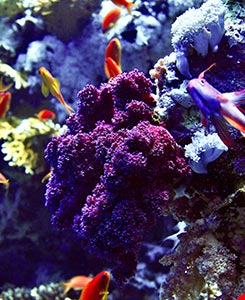 reef aquarium tank setup idea