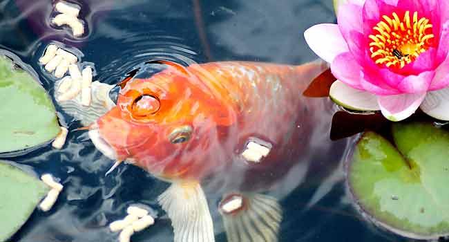 Aquarium Fish Food Tip