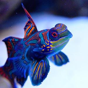 Saltwater Aquarium Fish Care Idea