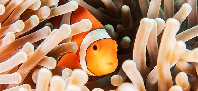 Saltwater Aquarium Fish Care Tips