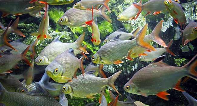 freshwater aquarium basic