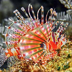 tropical saltwater fish tank tip