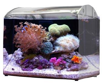nano saltwater aquarium tank for beginners