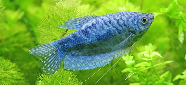 tropical freshwater fish tank