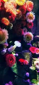 Coral reef aquarium polyps