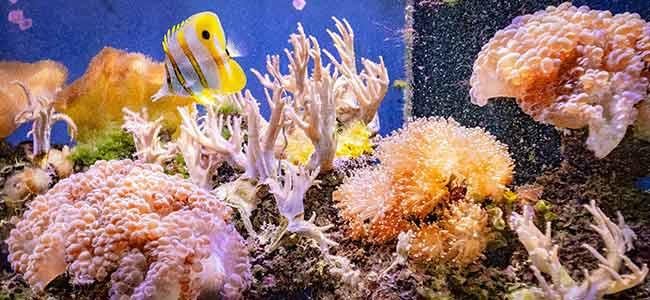 coral reef aquarium tanks