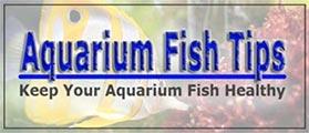 Aquarium Fish Tank Ideas